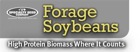 Forage Soybeans